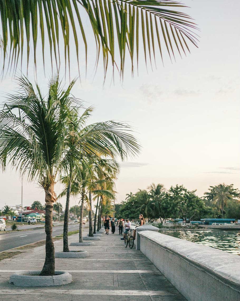 Jour 9 : Playa Larga -  Cienfuegos  (114 KM - environ 01h30)