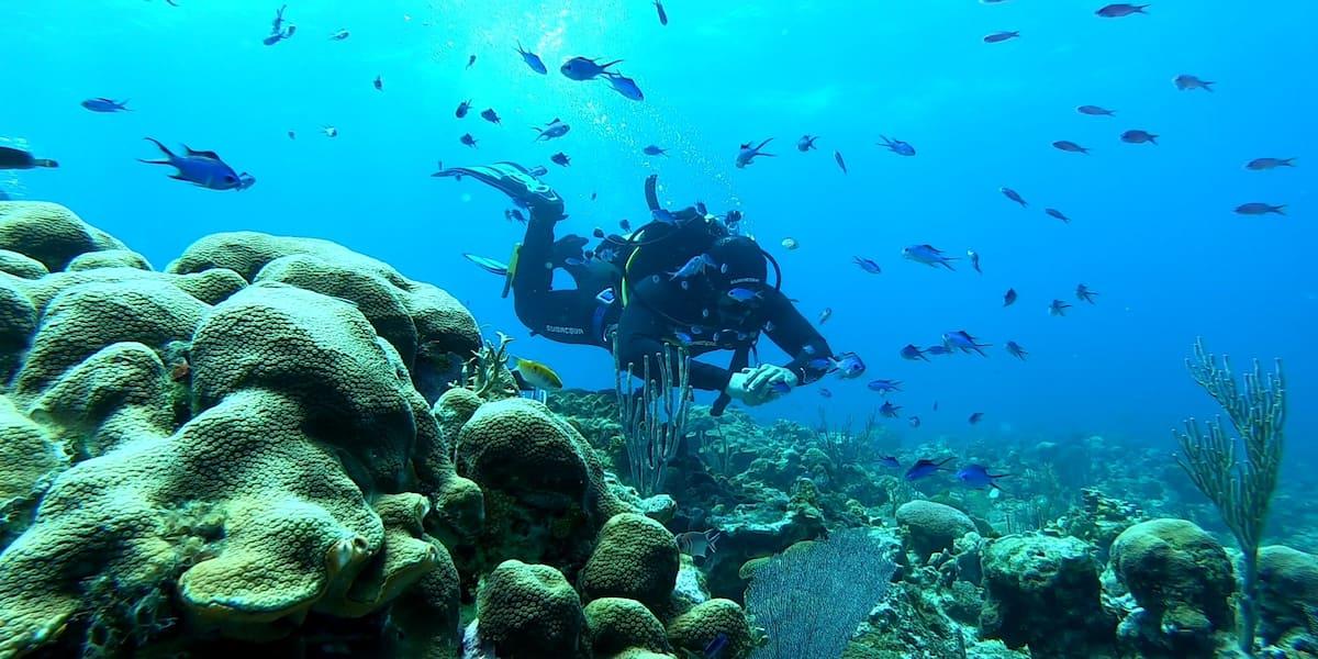 Programme : Aventure sous-marine